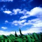 初夏の候はいつからいつまで?季語や旬の食べ物について。