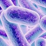 善玉菌を増やす食べ物は?悪玉菌との関係について。